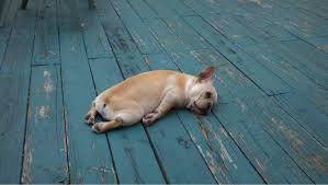 This doggy looks like I feel sometimes!